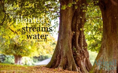 Like a tree planted by streams of water